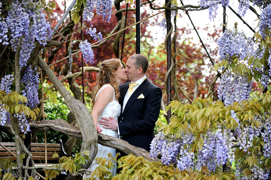 Romantic kiss captured in this wedding photograph from Kew Gardens in Surrey taken as the newlyweds stand within the fabulous Wisteria tree