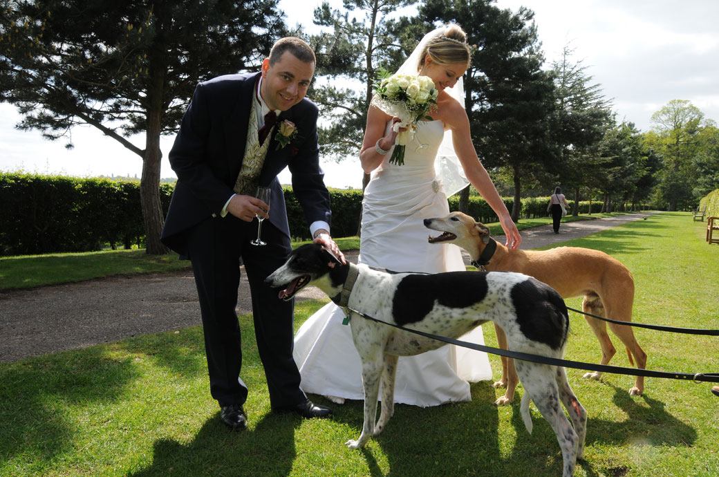 An unusual fun wedding photograph of a Bride and Groom petting some passing dogs at Painshill Park Cobham captured by Surrey Lane wedding photography