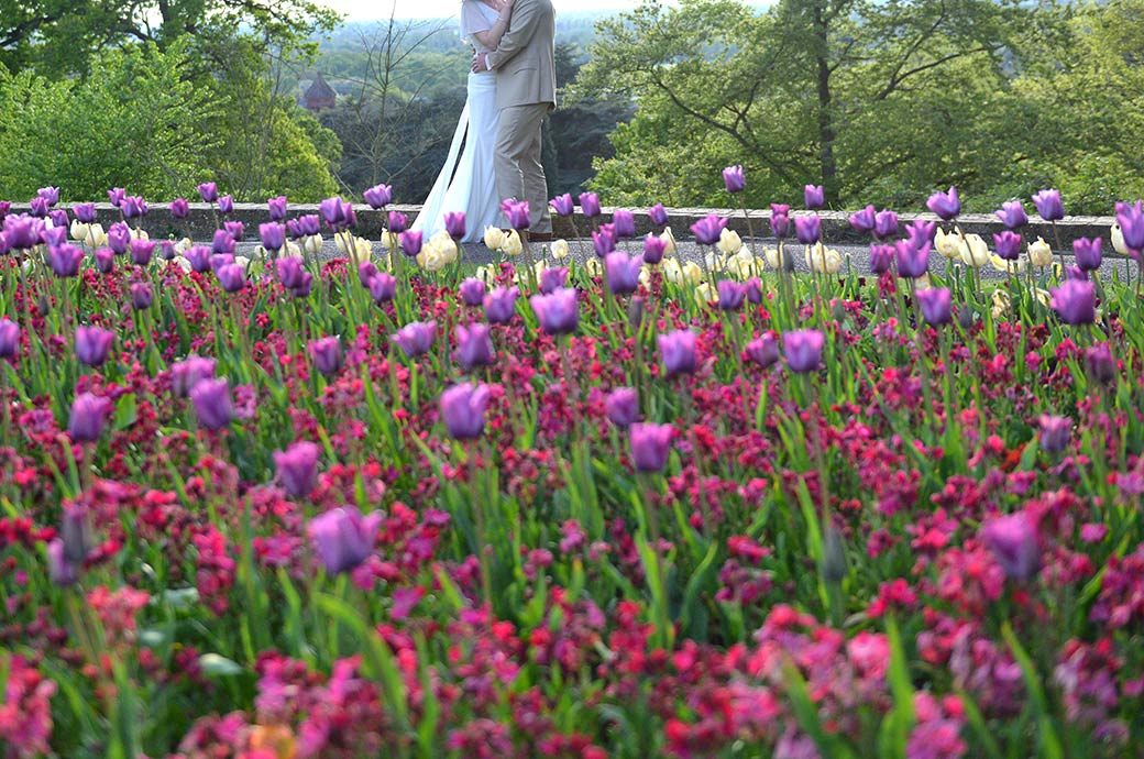 A glimpse of a newlywed couple in Richmond Park Surrey by the Pembroke Lodge wedding venue hugging in the distance through a wonderfully colourful bed of tulips