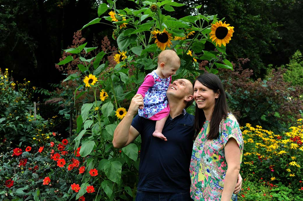 A lovely pre wedding photo of a family having fun by the sunflowers in the beautiful award winning Coombe Wood Gardens captured by Surrey Lane wedding photography