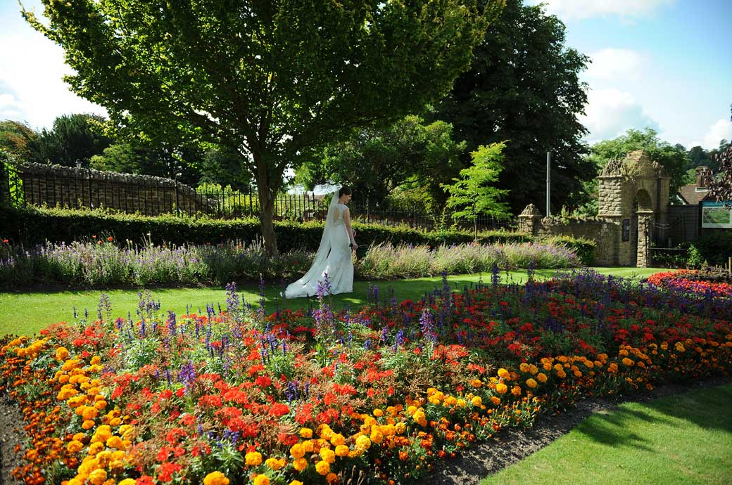 Wedding picture of a Bride walking  along the lawn beyond the brightly coloured flower beds in Guildford Castle Gardens in Surrey