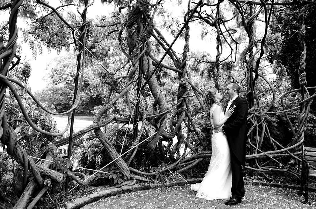 A Bride and groom hold each other amongst the mass of tangled creeper like trunks and branches of the fabulous wisteria tree at Surrey wedding venue Kew Gardens