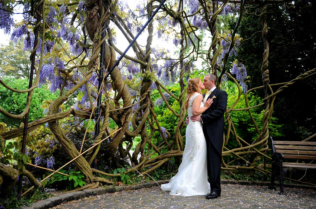 Passionate moment for the newlywed couple as they have a kiss inside the large in bloom Wisteria tree located at the very special Surrey wedding venue Kew Gardens