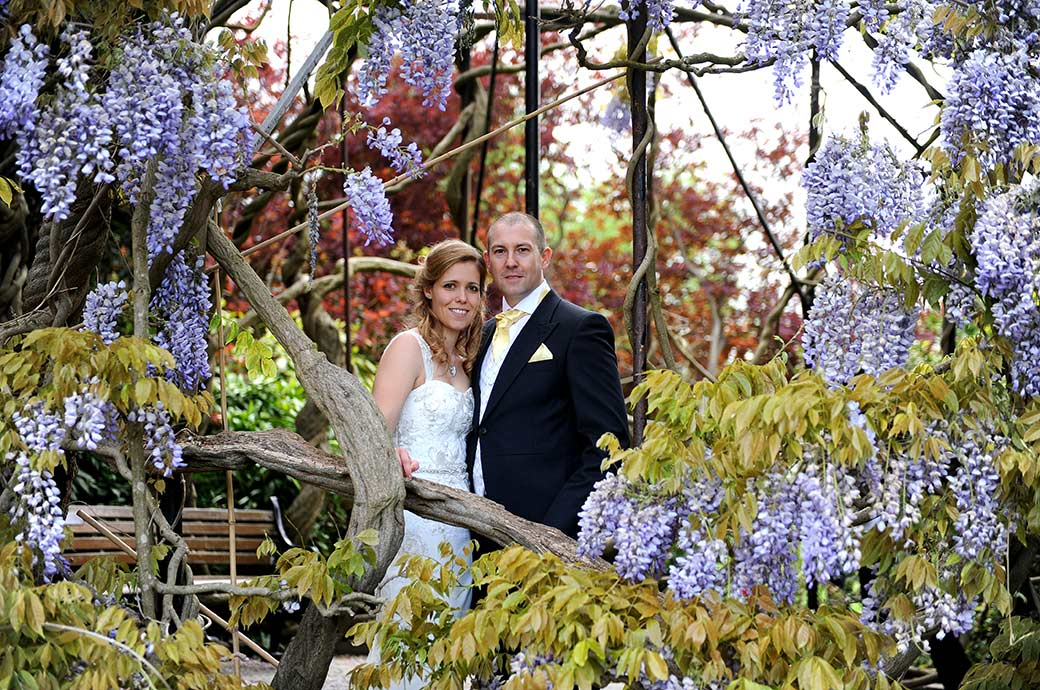 Proud Groom with his beautiful wife stand inside the magnificent Wisteria Tree at the world famous Kew Gardens after their marriage in Surrey wedding venue Cambridge Cottage