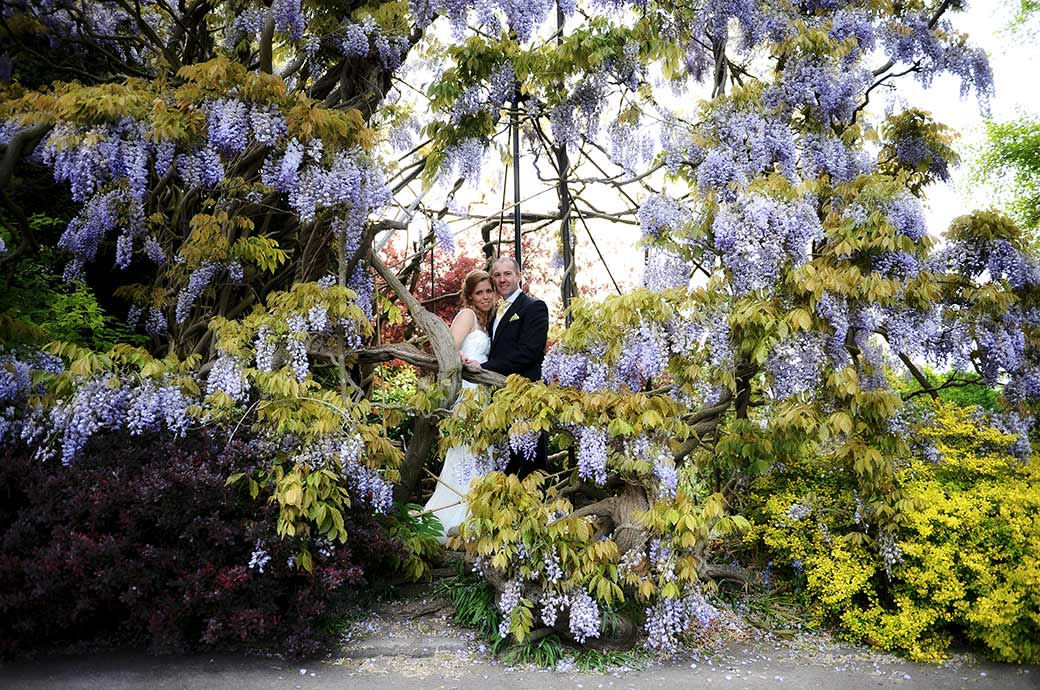 Bride and groom captured smiling after their wedding at Surrey wedding venue Cambridge Cottage as they stand within the magnificent Wisteria tree  in Kew Gardens
