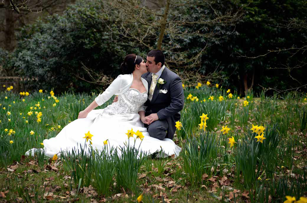 Wonderfully romantic kiss amongst the Daffodils wedding picture taken at Pembroke Lodge Richmond Park captured by Surrey Lane wedding photography