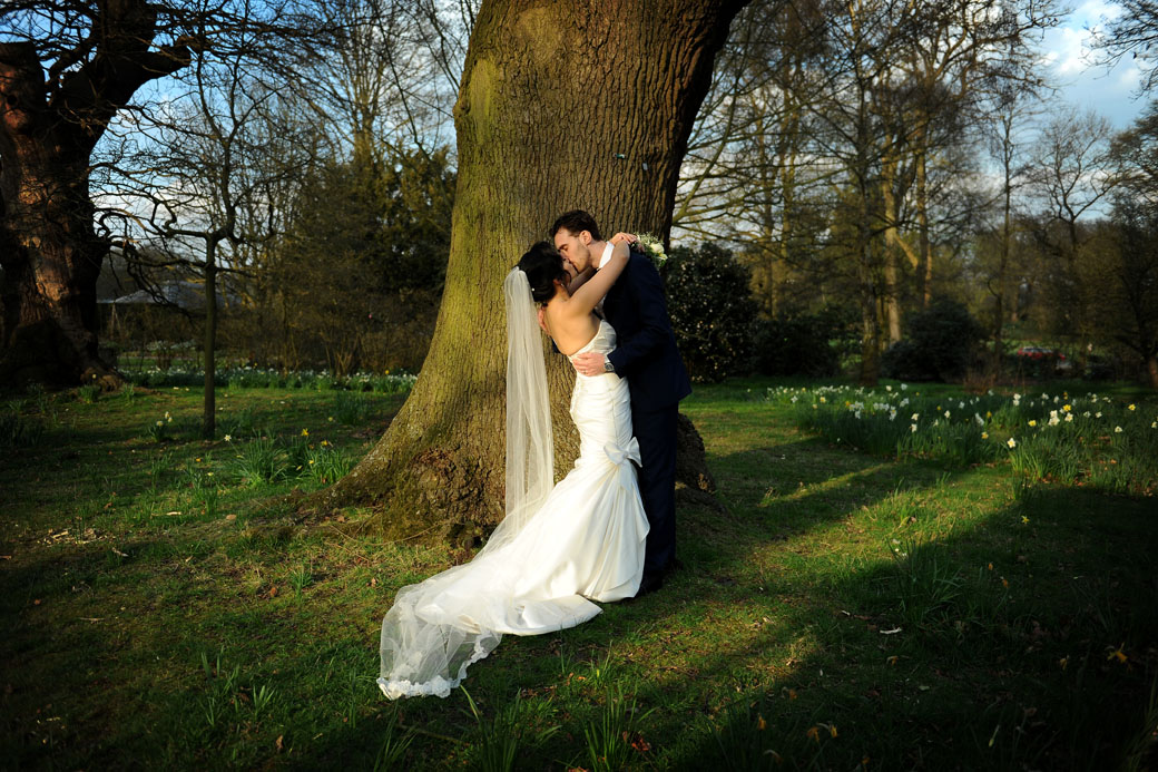 Passionate newlyweds kiss and embrace under the trees and by the daffodils at the beautiful Surrey wedding venue Pembroke Lodge situated in the beautiful Richmond Park