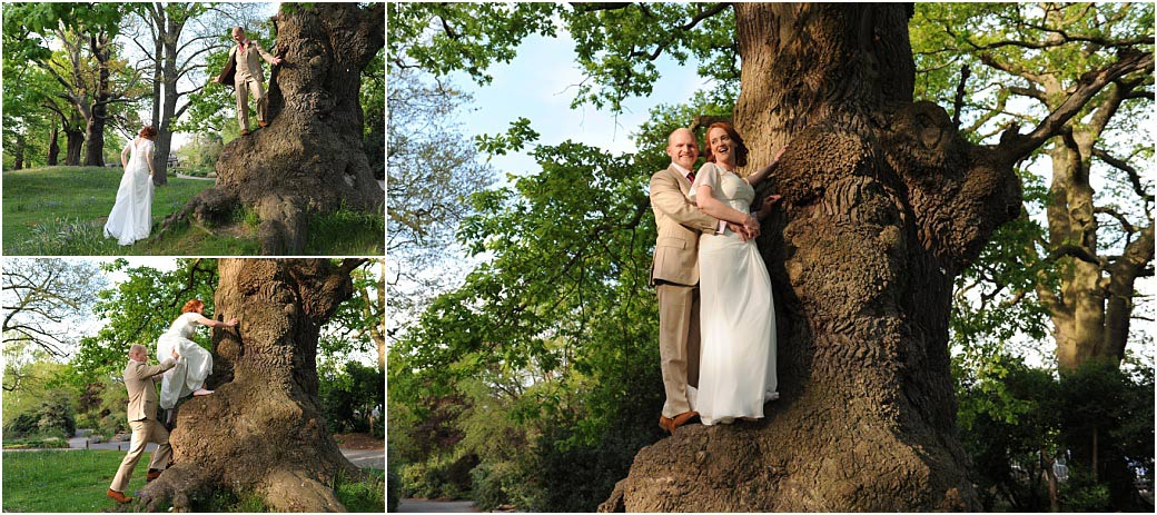 Unusual and fun wedding photographs of a Groom climbing an oak tree and helping his Bride up with him in Richmond Park Surrey after their Pembroke Lodge marriage
