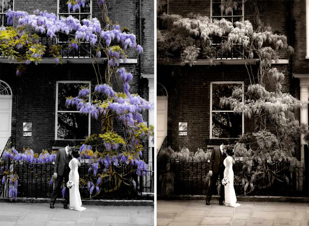 Two pictures of The Groom kissing his new wife in front of  the wisteria in Richmond Surrey  after getting married at Richmond Register Office